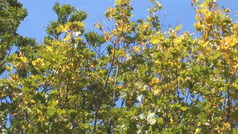 autumn 10 Stock Video Footage
