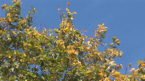 autumn 10 Footage
