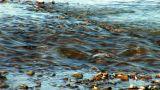 river prut 16 Footage