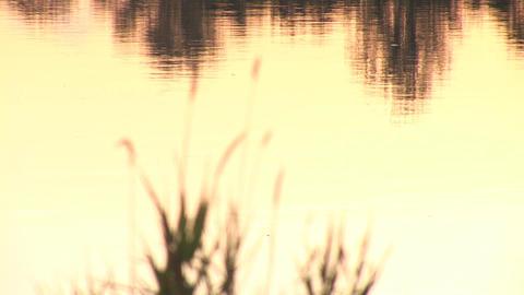 water bg 3 Footage