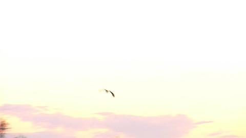 stork 1 Stock Video Footage