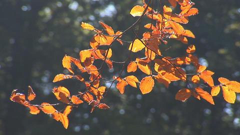 autumn 4 Stock Video Footage