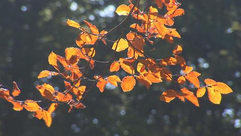 autumn 4 Footage