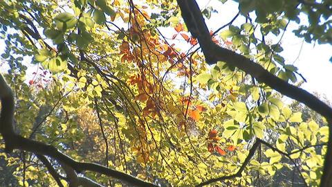 autumn 6 Stock Video Footage