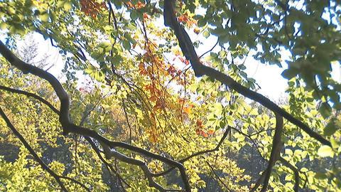 autumn 6 Footage