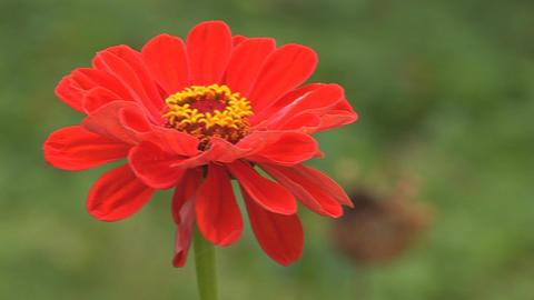 flower 7 Stock Video Footage
