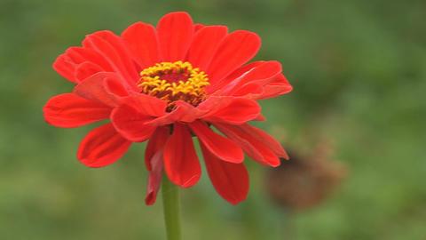 flower 7 Footage