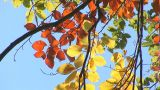 Autumn 1 stock footage