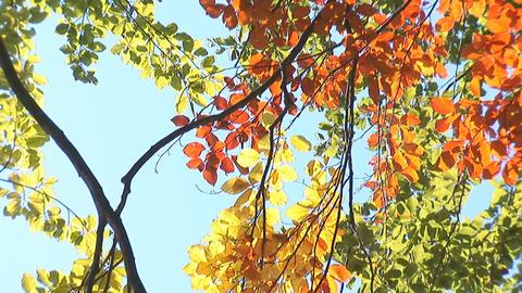 autumn 1 Footage