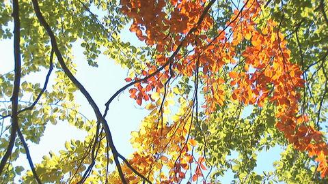 autumn 1 Stock Video Footage