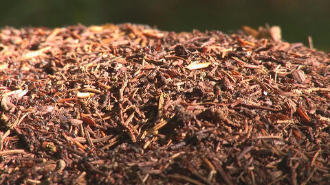 anthill 10 Stock Video Footage