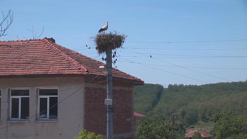 stork 2 Stock Video Footage