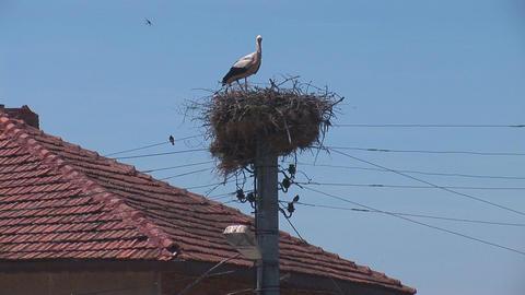 stork 2 Footage