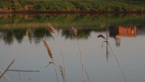 reeds on the lake evening Stock Video Footage