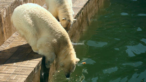 Polar bears Stock Video Footage