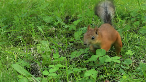 Squirrel scares the bird Stock Video Footage