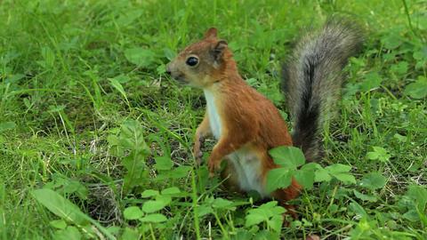 Squirrel scares the bird Footage
