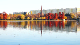 Autumn afternoon in a park with the tower of the orthodox church, gulls, blocks Footage