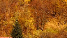 Carpathian Mountains in the autumn.Monastery in the mountains Pan tilt up