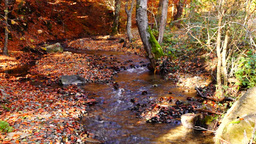 Mountain stream in the autumn forest with variegated leaves, tilt up Footage