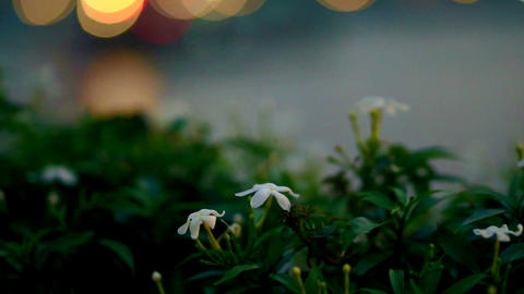 Flowers with blur light and river reflection background a scene from romantic di Footage
