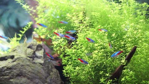 Aquarium with tropical colourful fish Footage