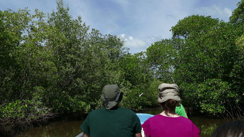 Cruising the mangroves of Juan Venado Island Nature Reserve Live Action