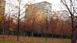 Tree trunks lined, november, park, blocks of flats,panoramic Footage