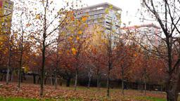 Tree trunks lined, november, park, blocks of flats,panoramic Footage