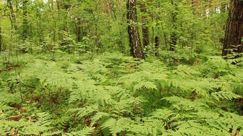 green forest with trees and fern Footage