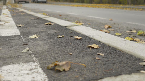 Curb with Autumn Leaves ライブ動画