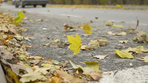 Wind Spreading Leaves on Street Footage