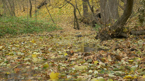 Autumn Leaves on Water Stream Footage