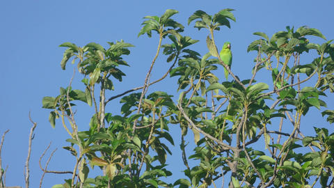 Two parrots in a tree at blue sky Footage