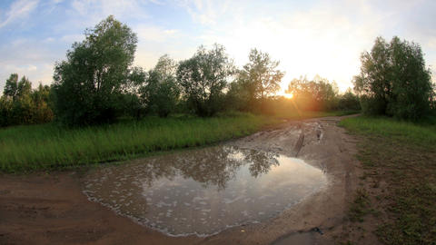 Sunset in the forest after the rain clouds reflected in a puddle. Lubinsky Distr Footage