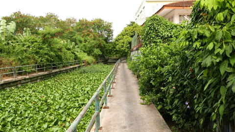 Small channel, overgrowth with invasing aquatic plant, water hyacinth Live Action