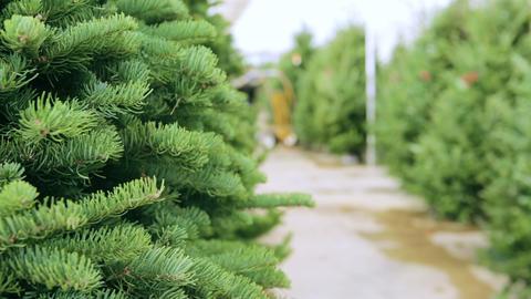 Christmas tree farm Live Action
