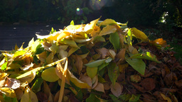 Large Piles Of Leaves In The Garden stock footage