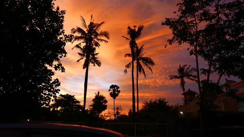 Tropical sunset, palm trees against vibrant yellowish clouds sky Footage