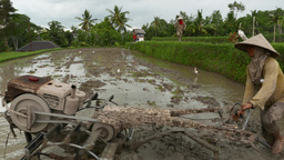 Balinese peasant drive two wheel tractor with rotary tiller on boggy paddy field Live Action