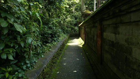 Walk along ancient wall in jungle, straight pathway around temple in forest Footage