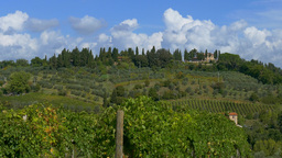 Landscape And Vineyards In Tuscany, Italy stock footage