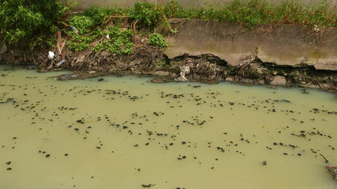 Stink flow in raw canalisation drainage flow, open canal, green muddy stream Footage
