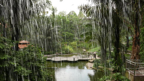Bird Park view from behind waterfall streams, cave gallery with water window Footage