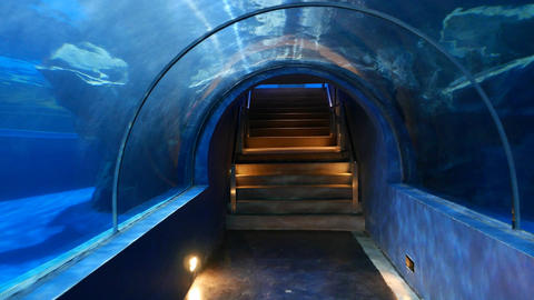 Walk through and out of underwater glass tunnel, oceanarium attraction Live Action