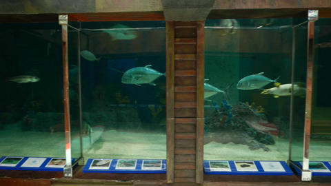 Fish in zoo aquarium, tracking shot, tuna and other species Live Action
