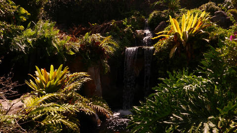Deep tropical foliage, small waterfall, yellow leaves surrounding Footage