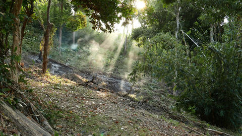Small smoulder area tropical forest opening, smoke and back sunlight rays Footage