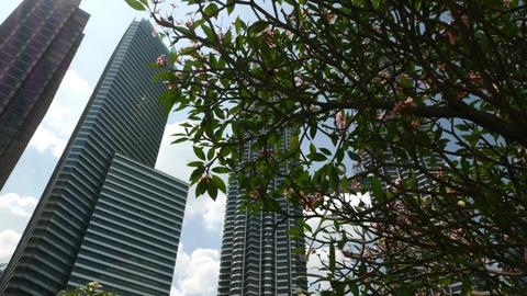 Panning shot, Menara Petronas Twin Towers appearing from behind flowering tree Footage