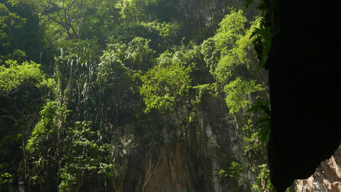 Dense Green Foliage And Vegetation On Side Wall Of Open Cave, Sunlight stock footage